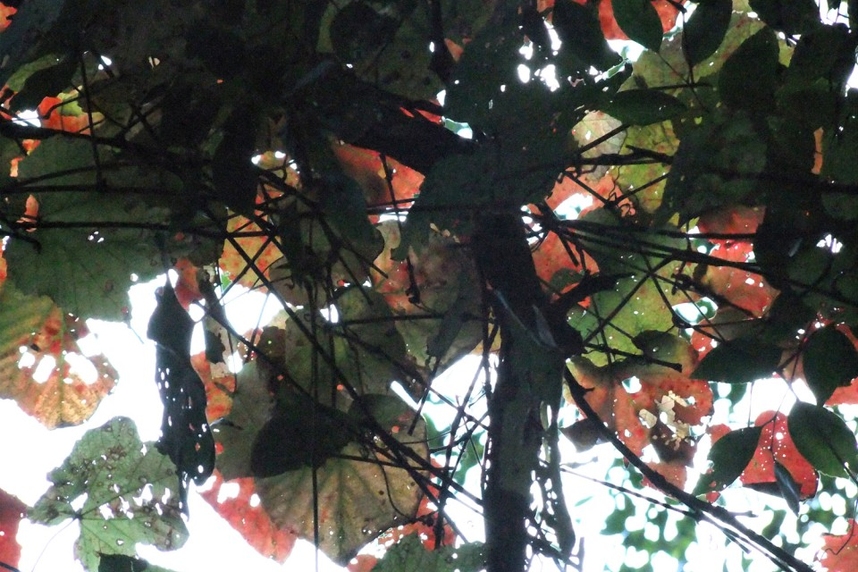 秋的水墨画  靳新国摄于平谷