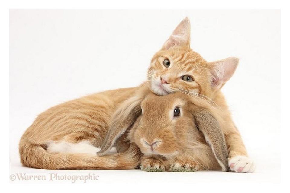 动物界另类亲子照 不同物种的超可爱配搭